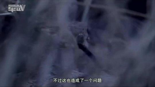 第五季16:空空导弹-响尾蛇之吻