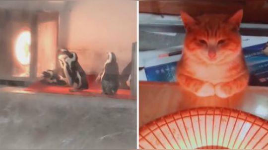 有才的网友:北方的冬天到底有多冷,连动物园的企鹅都开始烤火了
