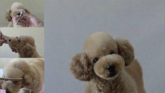 宠物美容教程 摩登宠物泰迪花生头修剪视频
