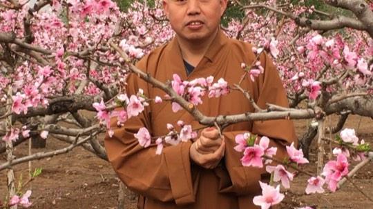 人间四月芳菲天,春风细雨桃花烂漫。用最好的态度去面对生活,用最好的心态去解读生活,用最好的心情展开生活。