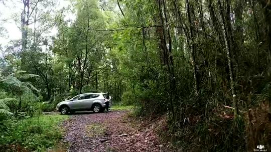 自驾南澳原始森林 盘山停留