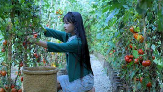 """咕噜咕噜… 番茄又熟了 再不摘的话又便宜了土地爷爷 做了好吃的""""红宝石番茄酱"""" 浓汤番茄锅,摘点时令的各种蔬菜, 凑活凑活也是一餐……"""