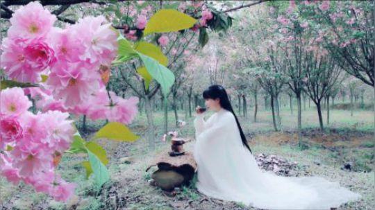 漫山的八重樱开到颓靡, 又是一年樱花季。 不太习惯腌渍樱花的味道,所以用去年做荷花茶的古老法子制成了樱花茶。 淡紫色的成茶,口齿留香。 或许,值得一试……