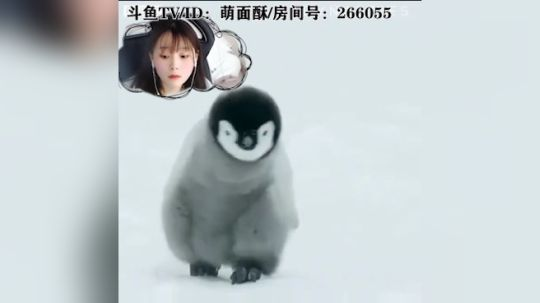 古荡的小企鹅酥酥