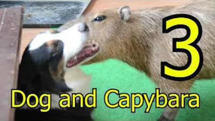 Dog and Capybara 3