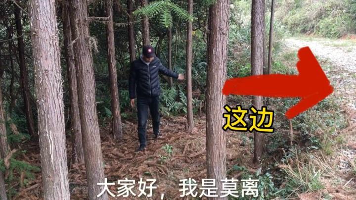 小莫在山上有新發現,就在他的左邊,第一次遇見呢